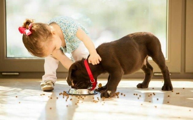Menina pequena ajudando cão a comer