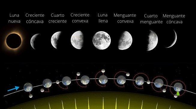 Imagen en la que aparecen las fases lunares