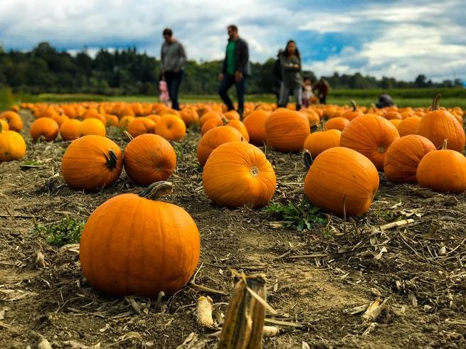 People on a pumpkin patch