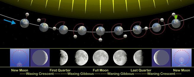 The phases of the moon illustrated.