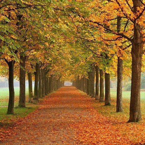 Outono: quando começa e características