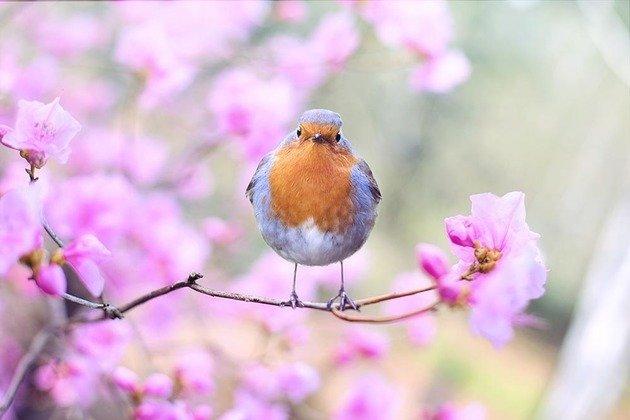 Paisagem de passarinho pendurado em galho florido
