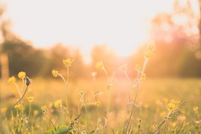 flowers blooming sun