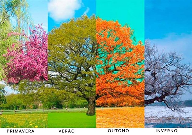 árvore mostrando alteração das estações do ano