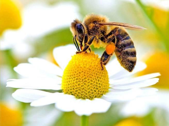 dia das abelhas