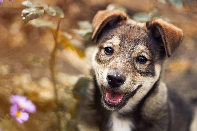 dia do cachorro