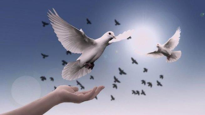 pombas no céu