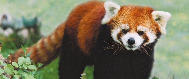 Animal em extinção
