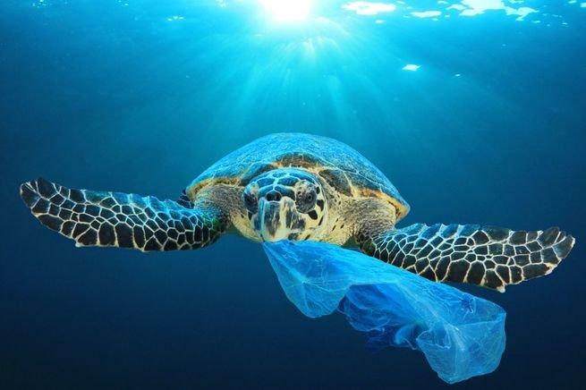 Tartaruga engolindo plástico