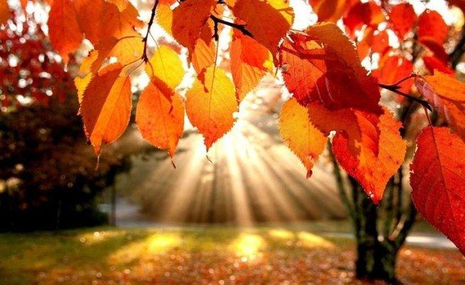 Paisagem de outono com árvore avermelhada