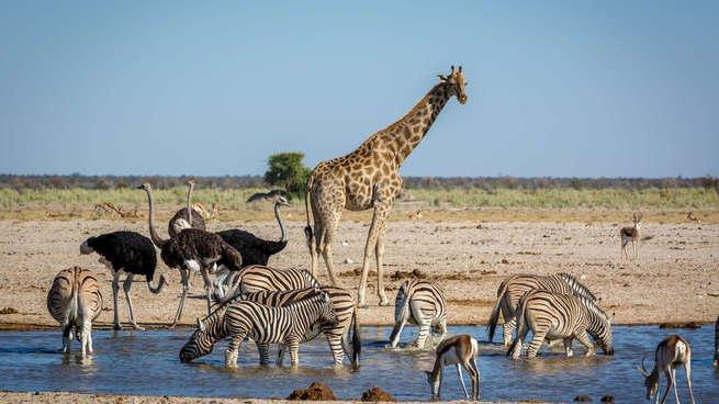 Animais selvagens à beira de um lago